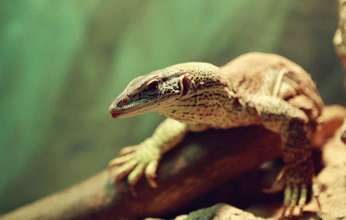 crocodile_bay_03