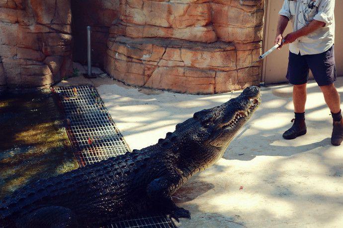 crocodile_bay_14
