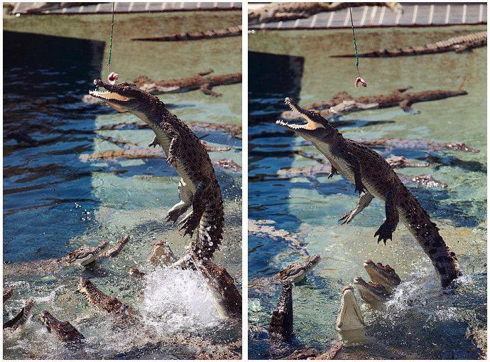 crocodile_bay_19