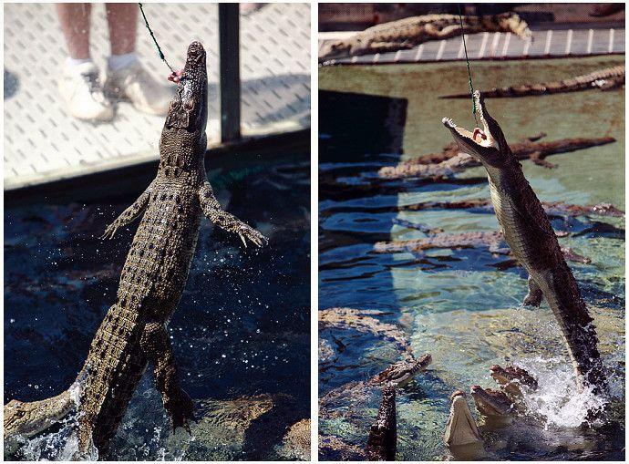 crocodile_bay_20