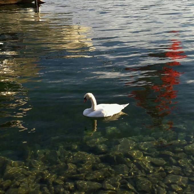Lake Lucerne_03