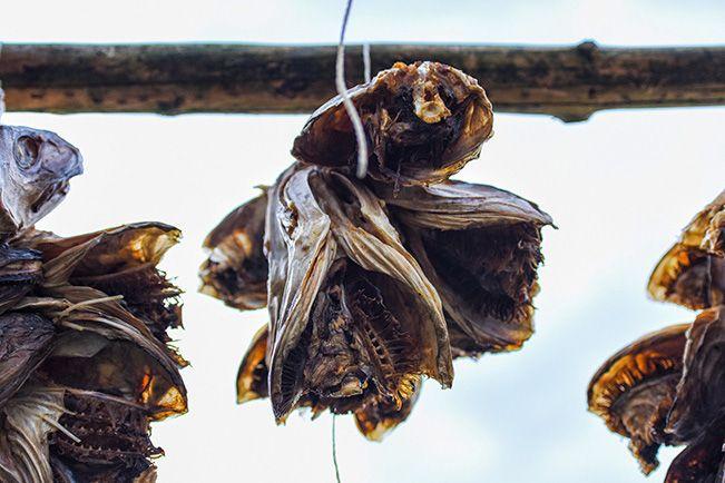 fish-drying_02